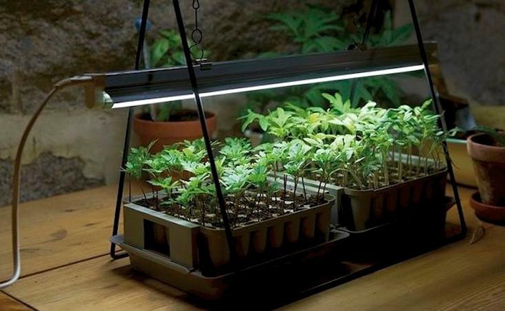 luci za rastline